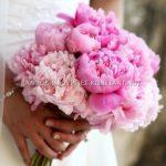 ροζ πεονιες