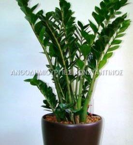 αγορα φυτων online