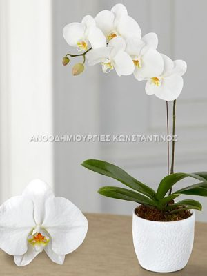 white orchea pots at price