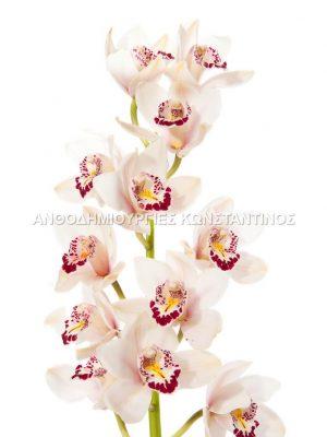 Συμπίντιουμ Ορχιδέες λουλούδια σε διάφορα χρώματα! Όλα μας τα λουλούδια μπορείτε να τα βρείτε και online! Ανθοπωλείο Ανθοδημιουργίες Τούμπα Θεσσαλονίκη