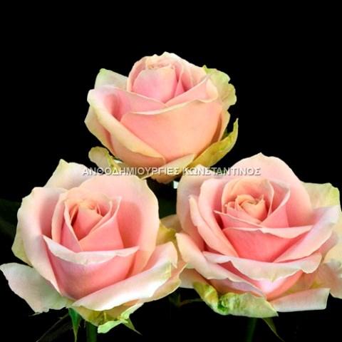 ροζ τριανταφυλλο Μοναδικά Τριαντάφυλλα σε σπάνιες ποικιλίες και διάφορα χρώματα! Όλα μας τα λουλούδια μπορείτε να τα βρείτε online! Ανθοπωλείο Ανθοδημιουργίες Τούμπα Θεσσαλονίκη