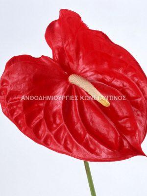 Ανθούρια σε μεγάλη ποικίλια χρωμάτων! Όλα μας τα λουλούδια μπορείτε να τα βρείτε και online! Ανθοπωλείο Ανθοδημιουργίες Τούμπα Θεσσαλονίκη