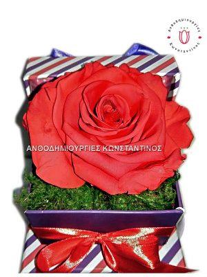 Forever Roses στη Θεσσαλονίκη! Κουτί πολυτελείας με100% αληθινό τριαντάφυλλο που ζεί για πάντα. Ανθοπωλείο Ανθοδημιουργίες Τούμπα Θεσσαλονίκη