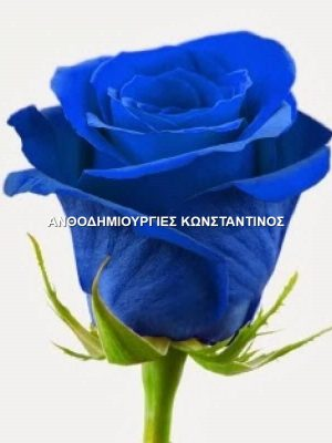same-day shipment of blue roses to the city of Thessaloniki