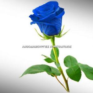 αγορά μπλε τριαντάφυλλα για θεσσαλονικη