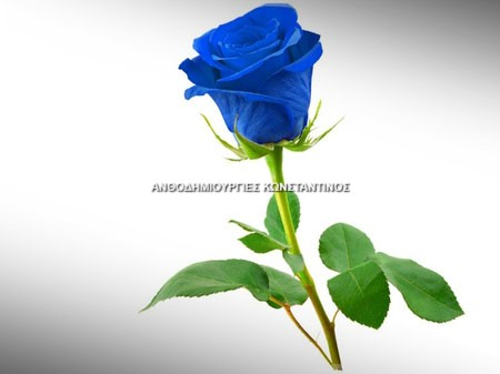 Μπλέ Τριαντάφυλλα Όλα μας τα λουλούδια μπορείτε να τα βρείτε online! Ανθοπωλείο Ανθοδημιουργίες Τούμπα Θεσσαλονίκη