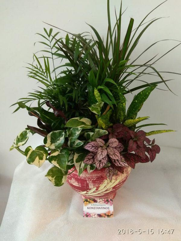συνθεσεις φυτων για εγκαινια αγορα αποστολη θεσσαλονικη