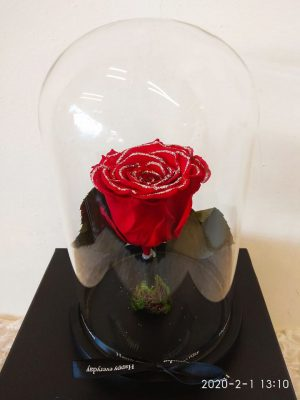 rose red in glass bell