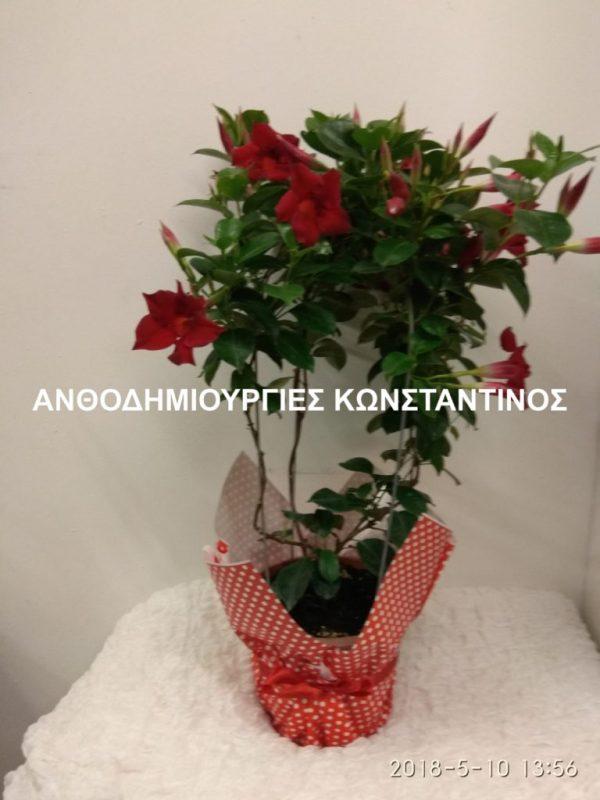 αγορα online φυτων