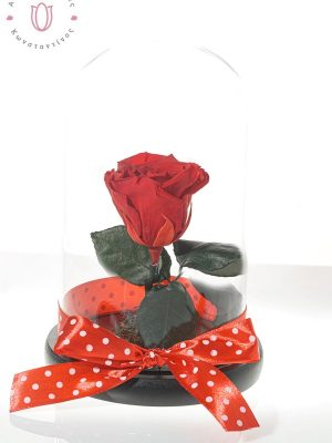 Impressive red FOREVER ROSES from Ecuador decorated in a glass dome. They do not need water and should not be directly exposed to sunlight. Glass bell dimensions 14χ21 cm.