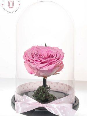 μεγάλο τριαντάφυλλο ροζ σε γυάλα. δώρο που κρατάει χρόνια