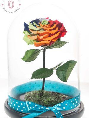 αιώνιο τριαντάφυλλο ουράνιο τόξο μέσα σε γυάλα διακοσμητική