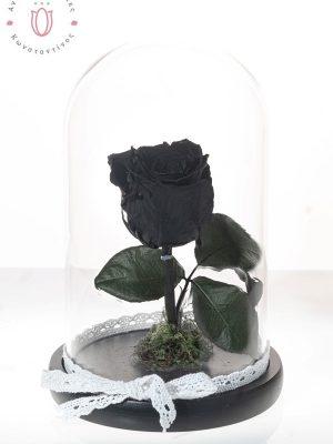 ΜΑΥΡΟ ΤΡΙΑΝΤΑΦΥΛΛΟ ΣΕ ΓΥΑΛΑ ΑΠΟ 45,00€ ΤΩΡΑ ΣΤΑ 35,00 Αιώνιο Μαύρο Τριαντάφυλλο από το Εκουαδόρ σε γυάλινη καμπάνα διαστάσεων 14×24 cm . BLACK FOREVER IN A GLASS.