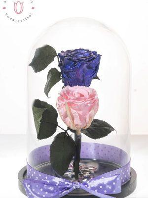 Σύνθεση με δυο υπέροχα τριαντάφυλλα forever σε ροζ και μωβ χρώμα διακοσμημένα με κρύσταλλα μέσα σε γυάλινη καμπάνα διαστάσεων 28χ18 cm.