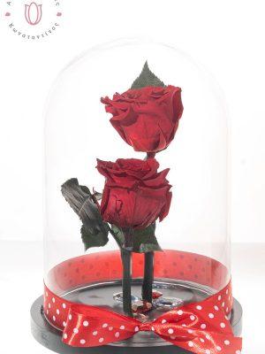 2 εντυπωσιακά Κόκκινα τριαντάφυλλα FOREVER μεγάλης διάρκειας τοποθετημένα σε γυάλινη καμπάνα . Διαστάσεις 18χ28cm