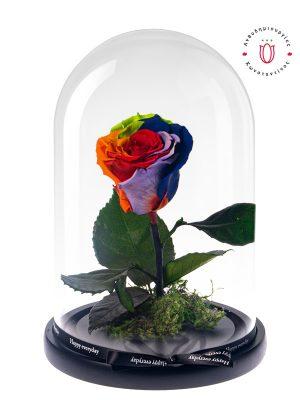 Forever Roses στη Θεσσαλονίκη! Μοναδικό Τριαντάφυλλο Forever Rainbow διακοσμημένο σε γυάλινο θόλο. Ανθοπωλείο Ανθοδημιουργίες Τούμπα Θεσσαλονίκης