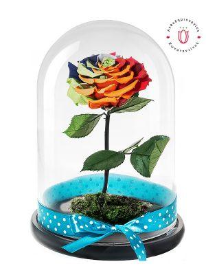Πανέμορφο αληθινό τριαντάφυλλο ουράνιο τόξο σε εντυπωσιακή γυάλινη καμπάνα. Ανθοπωλείο Ανθοδημιουργίες Τούμπα Θεσσαλονίκης