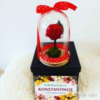 κόκκινο τριαντάφυλλο σε γυάλινο θόλο
