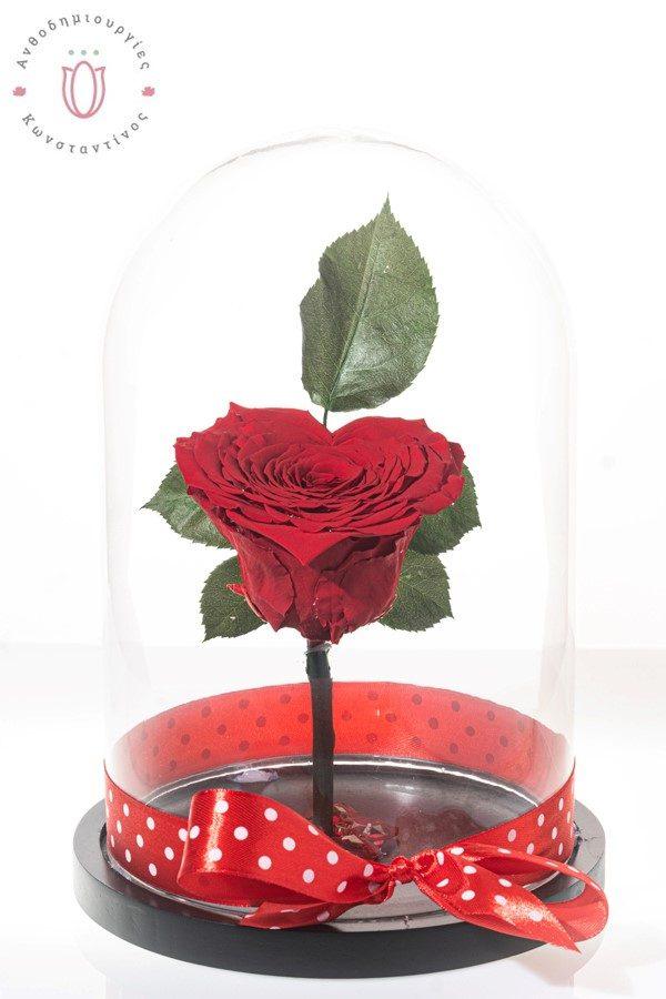 τριαντάφυλλο σε σχήμα καρδιάς που διαρκεί χρόνια μέσα σε γυάλα