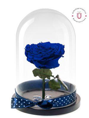 BLUE FOREVER ROSES Ανθοπωλείο Ανθοδημιουργίες Τούμπα Θεσσαλονίκη
