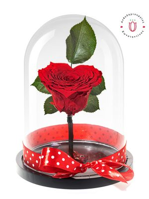 heart-red-rose-glass