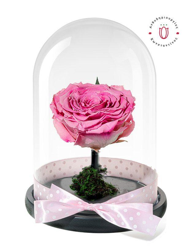 Μαγεμένο Τριαντάφυλλο στο Γυάλινο Θόλο | Forever Roses Ανθοπωλείο Ανθοδημιουργίες Τούμπα Θεσσαλονίκη