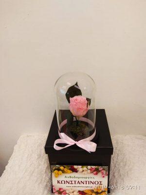 eternity roses pink   Forever Roses Ανθοπωλείο Ανθοδημιουργίες Τούμπα Θεσσαλονίκη