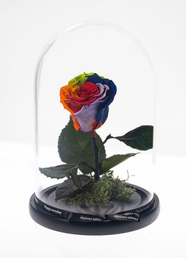 Μοναδικό Τριαντάφυλλο Forever Rainbow διακοσμημένο σε γυάλινο θόλο Διαστάσεων 12χ22 cm. Δεν χρειάζεται νερό και ήλιο. Εαν ακολουθήσετε αυτές τις οδηγίες το αληθινό τριαντάφυλλο από το Εκουαδόρ θα σας κρατήσει έως 5 χρόνια.
