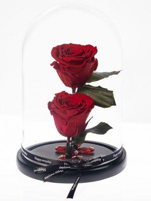 Κόκκινα Τριαντάφυλλο Forever από το Εκουαδόρ που διαρκεί χρόνια διαμέτρου 10,5cm διακοσμημένο σε γυάλινη καμπάνα 17,5x26cm με κορδέλα happy every day.