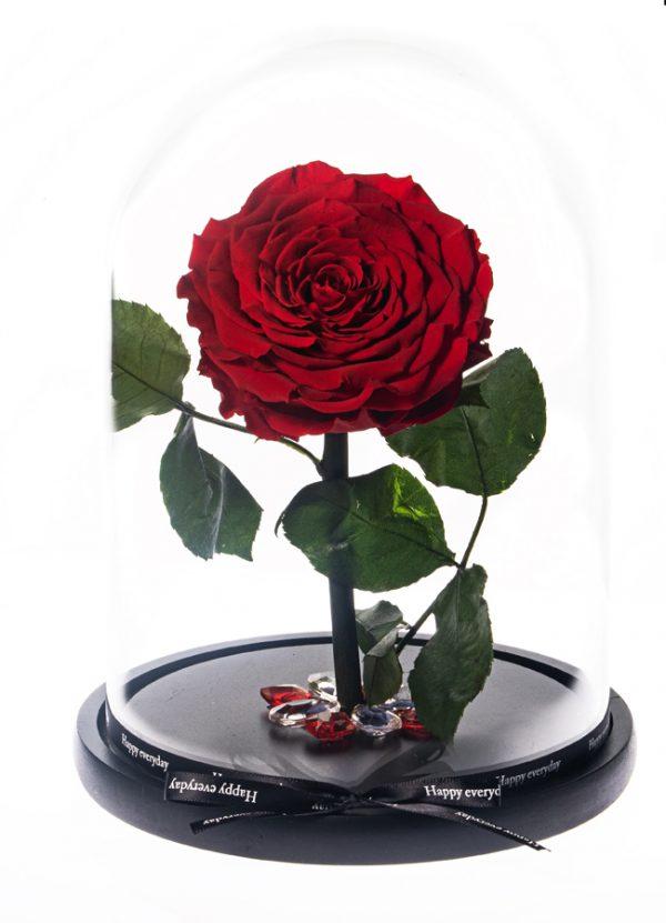 Μεγάλο κόκκινο Τριαντάφυλλο από το Εκουαδόρ που διαρκεί χρόνια διαμέτρου 10,5cm διακοσμημένο σε γυάλινη καμπάνα 17,5x26cm με κορδέλα happy every day.