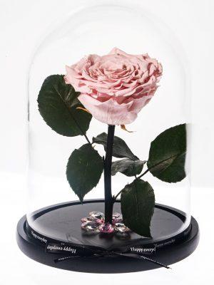 Παντοτινό Ροζ Τριαντάφυλλο από το Εκουαδόρ που διαρκεί χρόνια διαμέτρου 10,5cm διακοσμημένο σε γυάλινη καμπάνα 17,5x26cm με κορδέλα happy every day