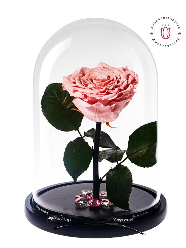 forever-rose-big-pink