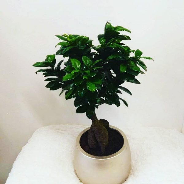 bonsai in ceramic