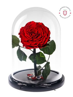 open-red-rose- forever in a glass